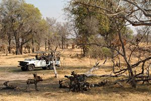 The Best Wildlife Reservations in Botswana